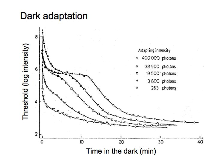 Perception Lecture Notes: Light/Dark Adaptation