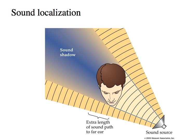 Sound localization field used to generate the sound example (top.