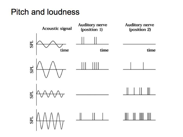 Perception Lecture Notes: Loudness Perception and Critical Bands