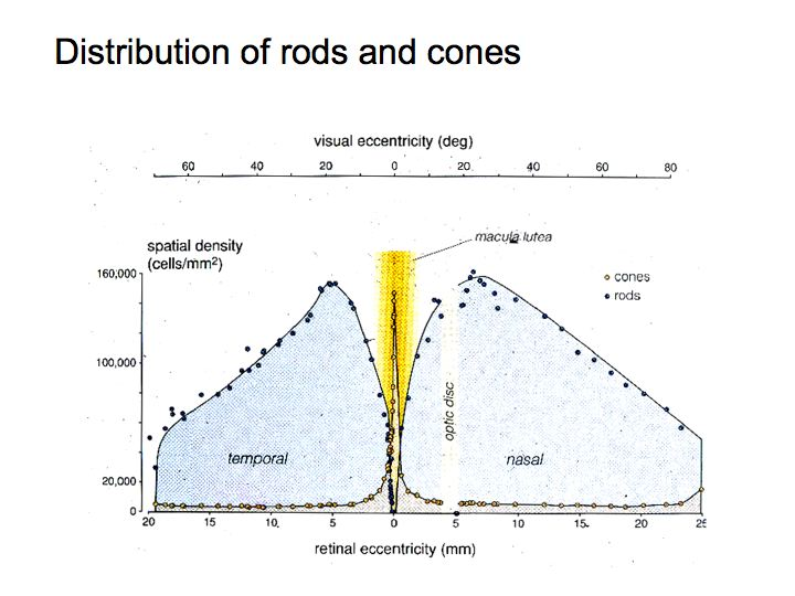 Perception Lecture Notes: The Retina