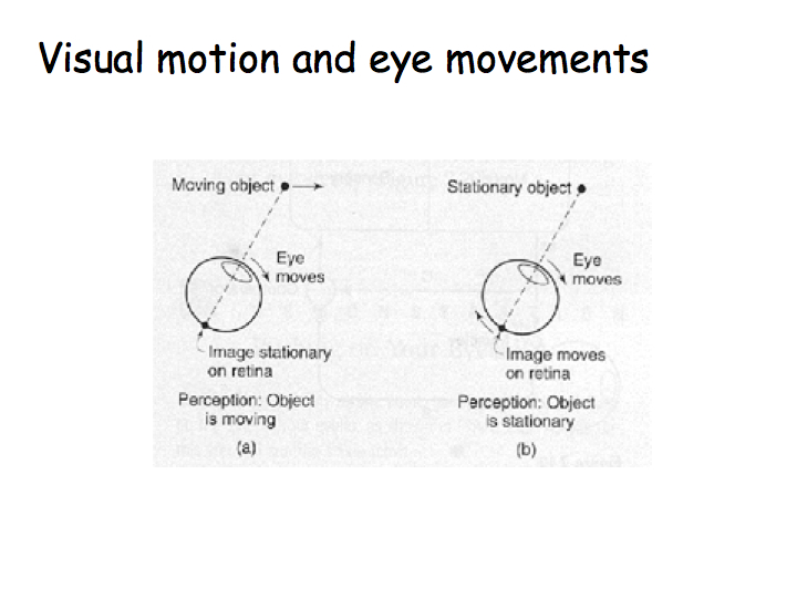 Perception Lecture Notes: Visual Motion Perception