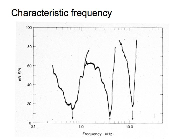Perception Lecture Notes: Frequency Tuning and Pitch Perception